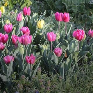 BlocConseil_les-tulipes-botanic-testees-et-approuvees