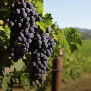 BlocConseil_plantez-la-vigne