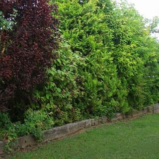 composez votre haie vive conseil jardin botanic botanic. Black Bedroom Furniture Sets. Home Design Ideas