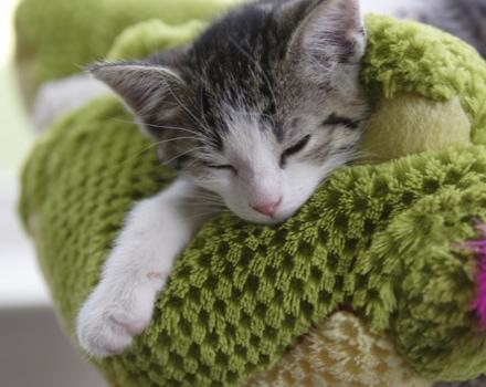 accueillir-un-chaton-chez-soi_30