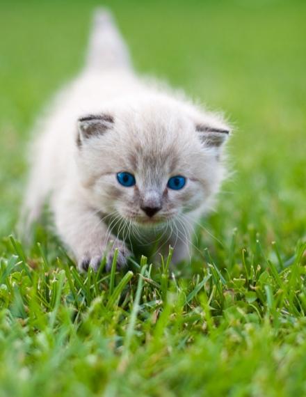 accueillir-un-chaton-chez-soi_60