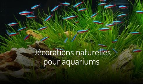 Décoration naturelles pour aquariums