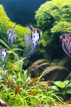 Des poissons en bonne santé