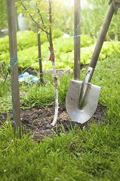 Plantation : les bons soins pour une bonne reprise