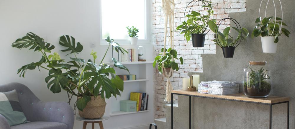 belle-plante-cherche-son-pot-ideal_1