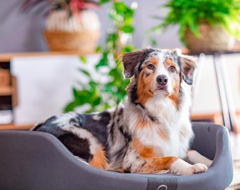 S'assurer de la qualité de sommeil de son chien, une nécessité pour votre plus fidèle compagnon