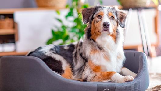Comment bien choisir le coussin pour son chien ?