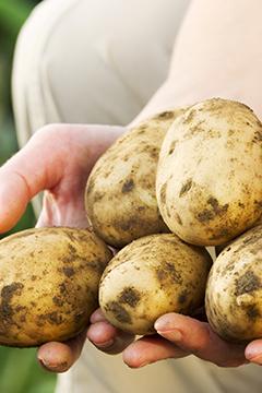 Butter les pommes de terre