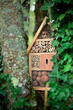 Construire un abri pour les insectes