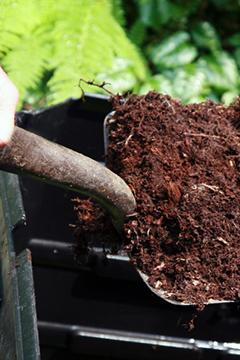 Enfouir une plante utile au sol