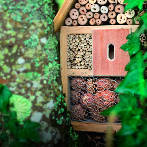 BlocConseil_construire-un-abri-pour-les-insectes