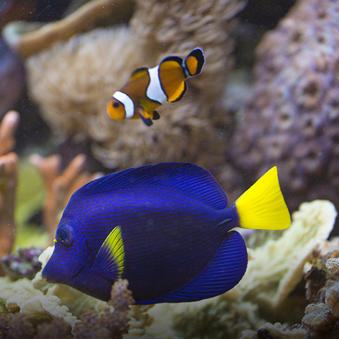 BlocConseil_creer-un-aquarium-marin
