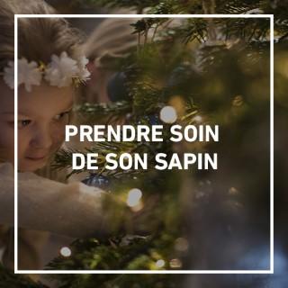 BlocConseil_sapins-de-noel_gestestendres