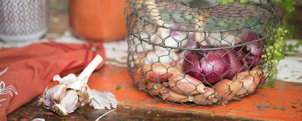 bulbes-potager-automne_70