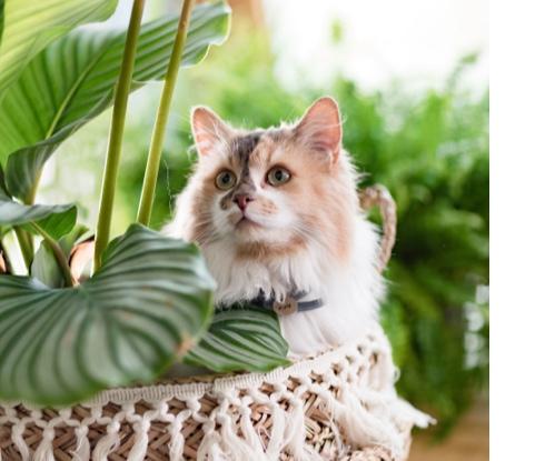 L'autre face des plantes d'intérieur, quand votre chat guide vos choix