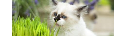 chats-et-plantes-d-interieur_70