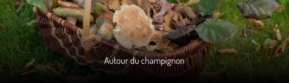 Autour du champignon