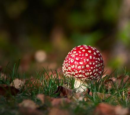 conseils-cueillir-des-champignons_60