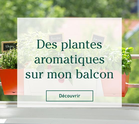Edito_des-plantes-aromatiques-sur-mon-balcon