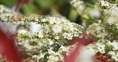 desherbage-naturel-jardinons-ecologique_6
