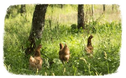 biolo-klock-nature-et-confitures_4_5
