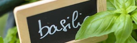 le-basilic-du-jardin-a-l-assiette-il-n-y-a-qu-un-pas_3_2