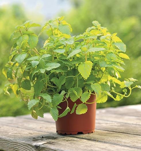 les-plantes-amies-des-animaux-spéciales-grignotage-intempestif_2