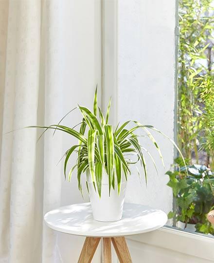 les-plantes-amies-des-animaux-spéciales-grignotage-intempestif_4