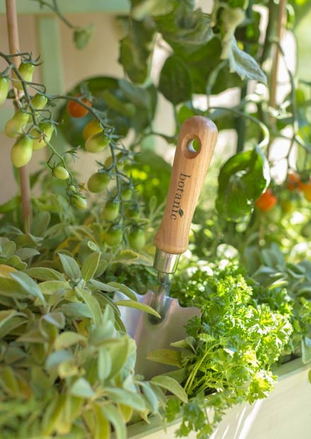 ribambelle-de-tomates-cocktail-colorees-cherche-terrasse-ensoleillee_4