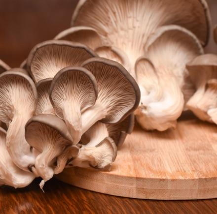 À chacun son kit de champignons bio Botanic