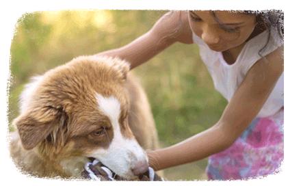 Comment bien nourrir son chien ?