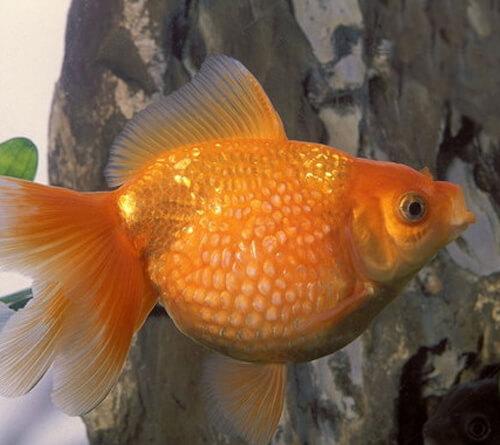 kaleidoscope-de-poissons-rouges_30