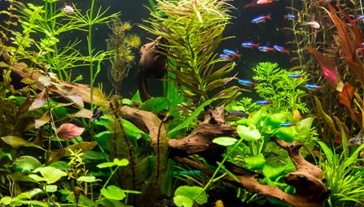 Une eau optimale pour mon aquarium