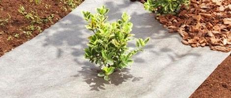 le-paillis-potager-botanic-teste-et-approuve_10