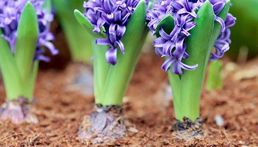4. Profiter de sa floraison