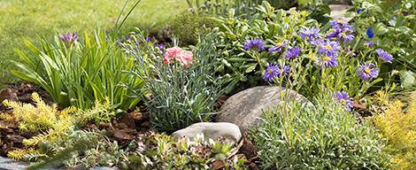 les plantes vivaces pour massif conseil jardin et plantes pour massif botanic botanic. Black Bedroom Furniture Sets. Home Design Ideas