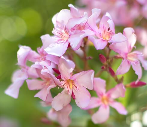 La plante vivace : une alliée de taille… et de longue date !