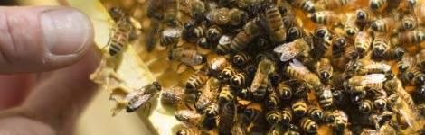 inviter-la-biodiversite-au-jardin_10
