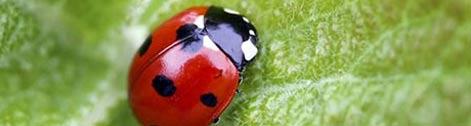 inviter-la-biodiversite-au-jardin_6