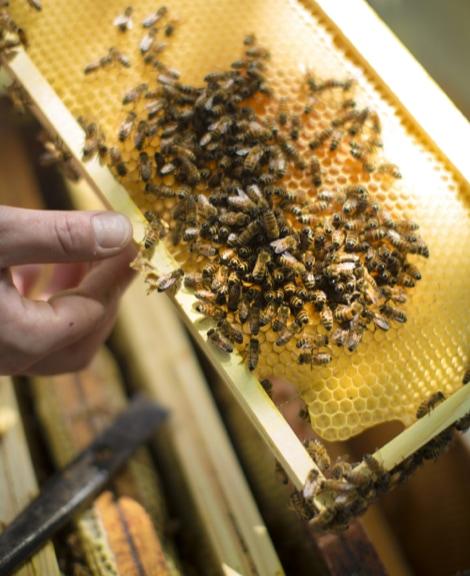 mobilisation-sauver-abeilles-et-preserver-biodiversite_30