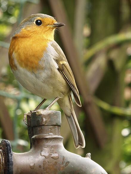 nourrir-les-oiseaux-du-jardin_30