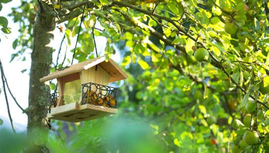 Oiseaux gourmands du jardin : une mangeoire pour les nourrir