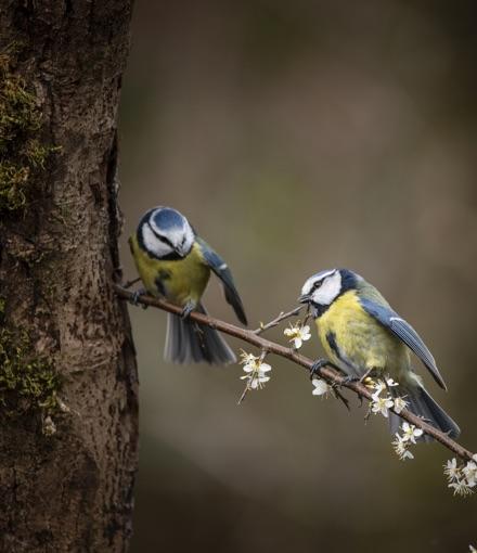 observer-les-oiseaux_50