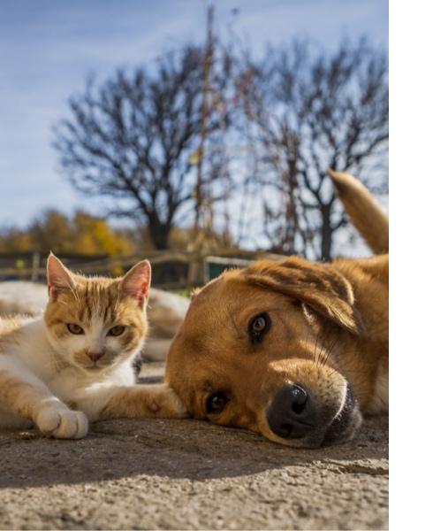 Comment choisir le mode de garde pour ses animaux?