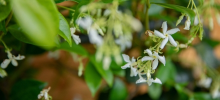 plantes-fleuries-botanic_110