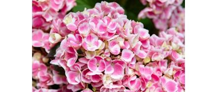 plantes-fleuries-botanic_50