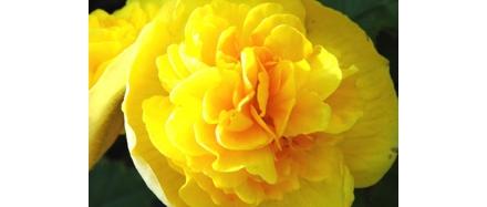 plantes-fleuries-botanic_70