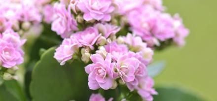 plantes-fleuries-botanic_90