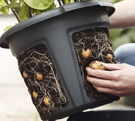 pommes-de-terre_30