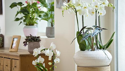 Prendre soin de mes plantes d'intérieur